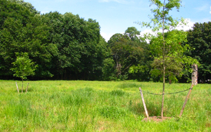 upland Meadow Read Sanctuary